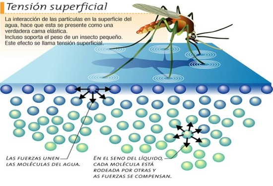tension superficial mosquito