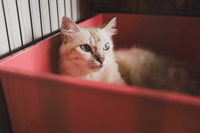 portada-gato-schrodinger
